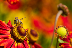 plant & insect fine art gallery - bee flower dragonfly spider pedal